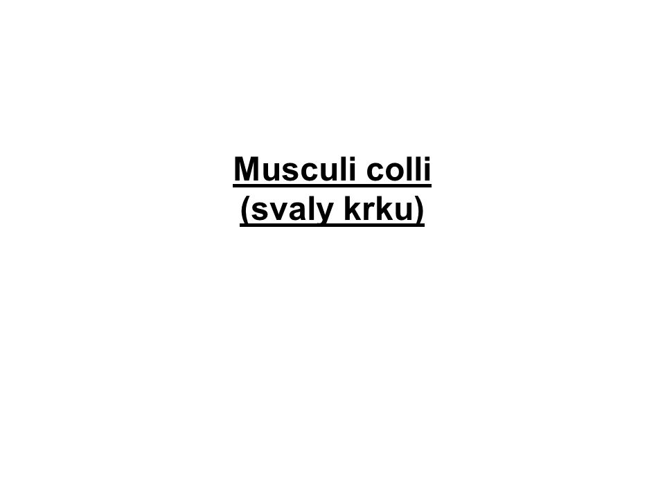 Musculi colli (svaly krku)
