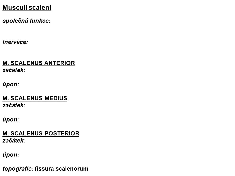 Musculi scaleni společná funkce: inervace: M. SCALENUS ANTERIOR začátek: úpon: M.