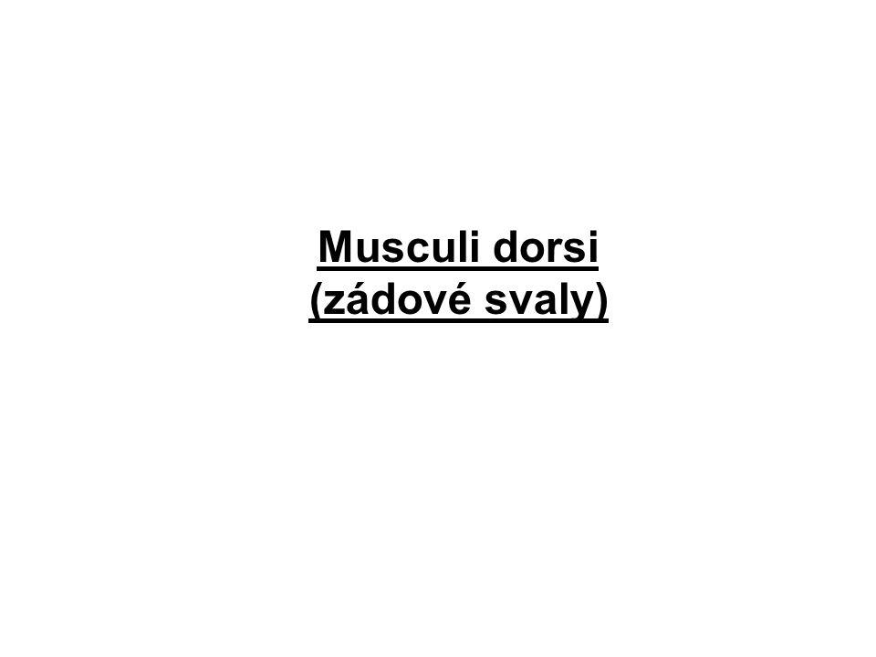Musculi dorsi (zádové svaly)