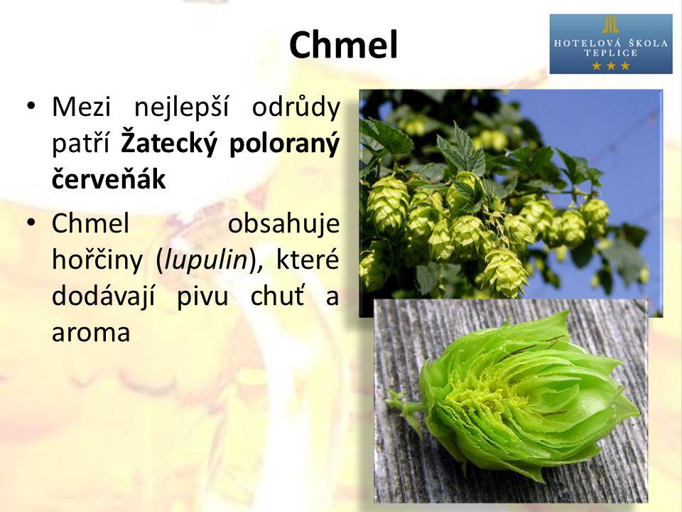 Chmel Mezi nejlepší odrůdy patří Žatecký poloraný červeňák Chmel obsahuje hořčiny (lupulin), které dodávají pivu chuť a aroma