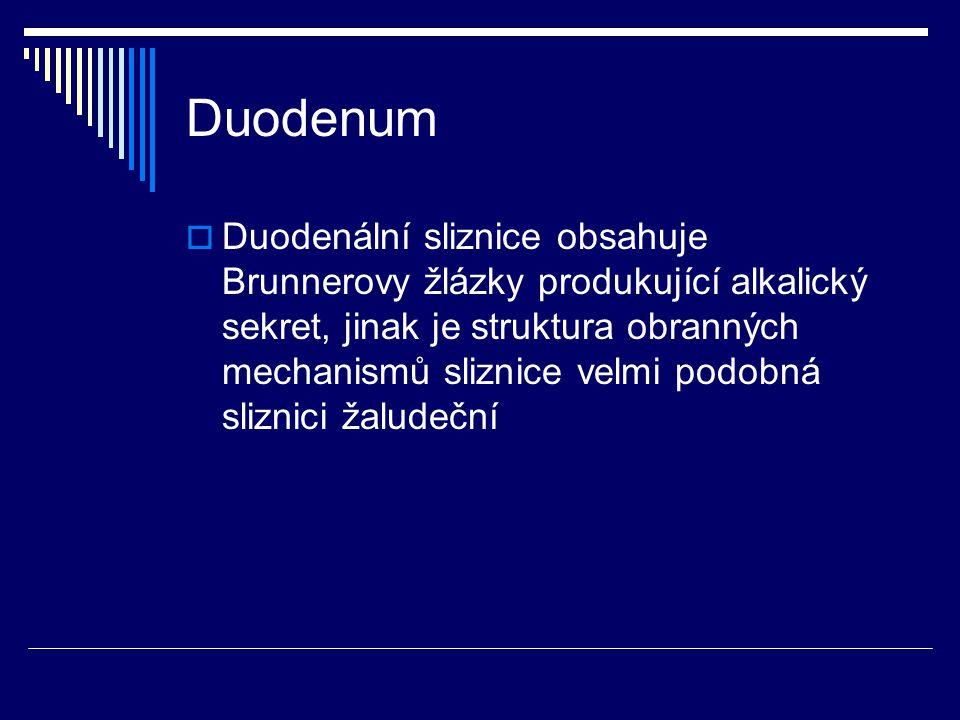 Duodenum  Duodenální sliznice obsahuje Brunnerovy žlázky produkující alkalický sekret, jinak je struktura obranných mechanismů sliznice velmi podobná sliznici žaludeční