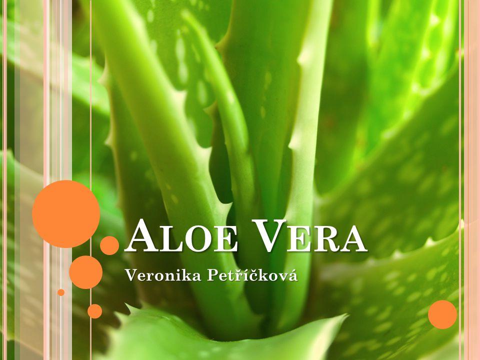 A LOE A LOE V ERA Veronika Petříčková