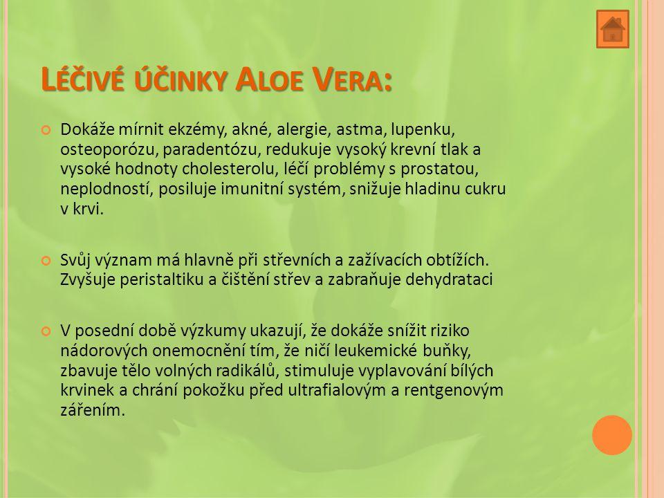 """L ÉČIVÉ ÚČINKY A LOE V ERA : Aloe Vera je v současnosti nazývaná jako """"královna léčivých rostlin"""" a to pro své obsáhlé účinky. Dokáže se vstřebávat de"""