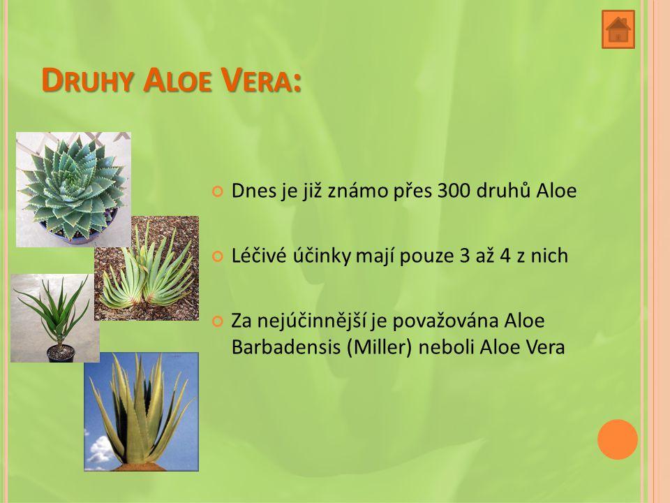 D RUHY A LOE V ERA : Dnes je již známo přes 300 druhů Aloe Léčivé účinky mají pouze 3 až 4 z nich Za nejúčinnější je považována Aloe Barbadensis (Miller) neboli Aloe Vera
