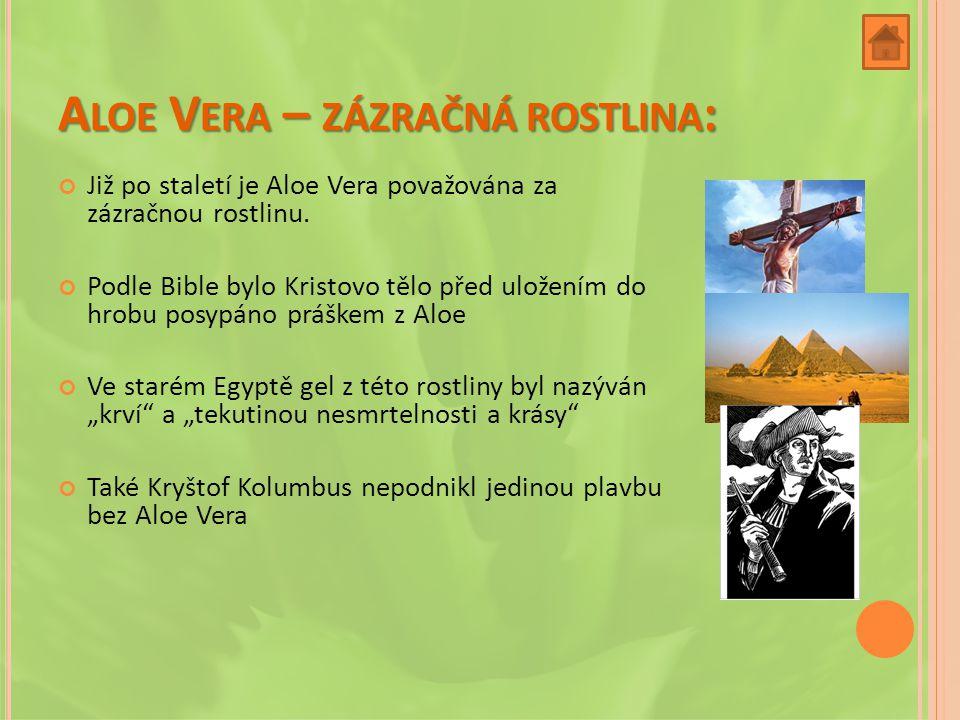 A LOE V ERA – ZÁZRAČNÁ ROSTLINA : Již po staletí je Aloe Vera považována za zázračnou rostlinu.