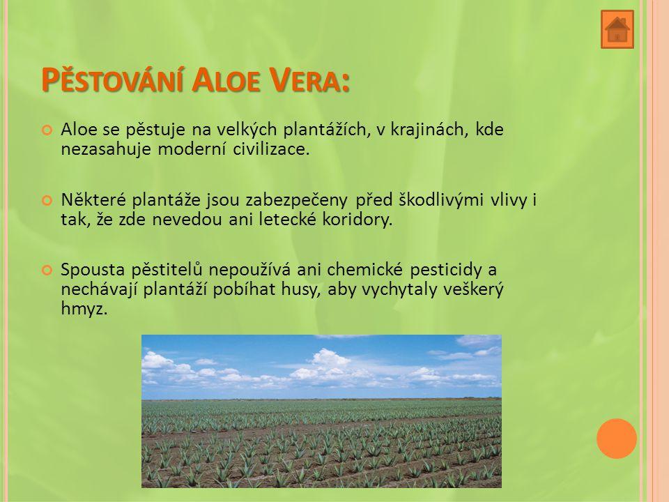 P ĚSTOVÁNÍ A LOE V ERA : Aloe se pěstuje na velkých plantážích, v krajinách, kde nezasahuje moderní civilizace.