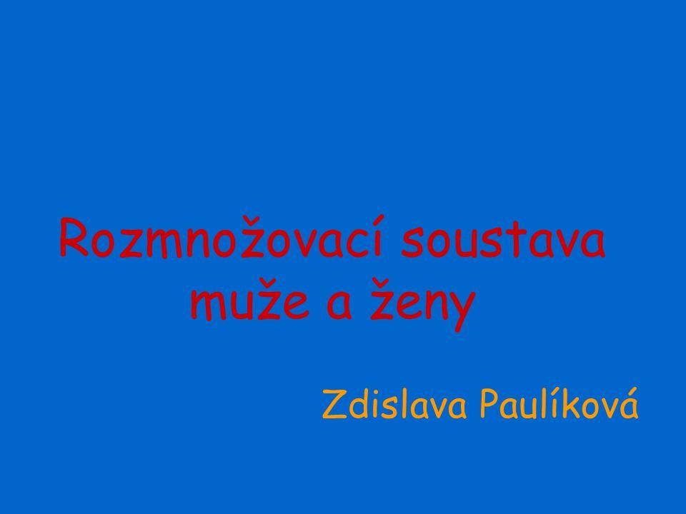 Rozmnožovací soustava muže a ženy Zdislava Paulíková