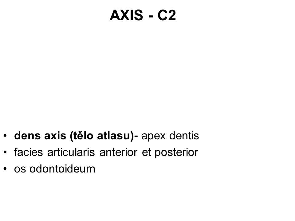 AXIS - C2 dens axis (tělo atlasu)- apex dentis facies articularis anterior et posterior os odontoideum