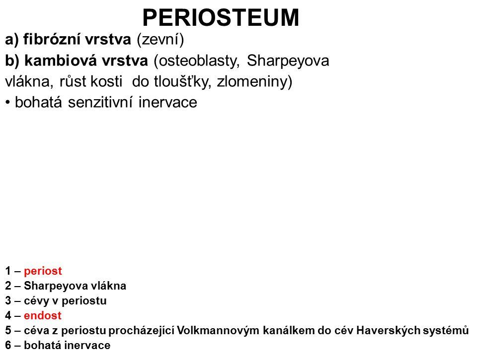 1 – periost 2 – Sharpeyova vlákna 3 – cévy v periostu 4 – endost 5 – céva z periostu procházející Volkmannovým kanálkem do cév Haverských systémů 6 –