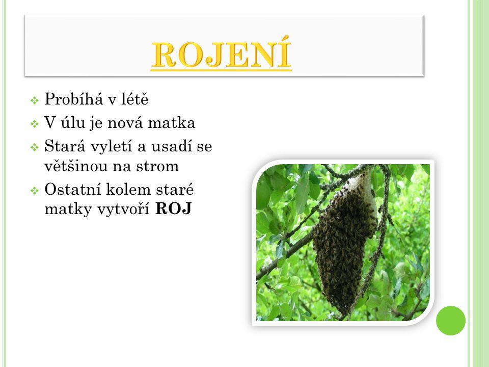  Probíhá v létě  V úlu je nová matka  Stará vyletí a usadí se většinou na strom  Ostatní kolem staré matky vytvoří ROJ