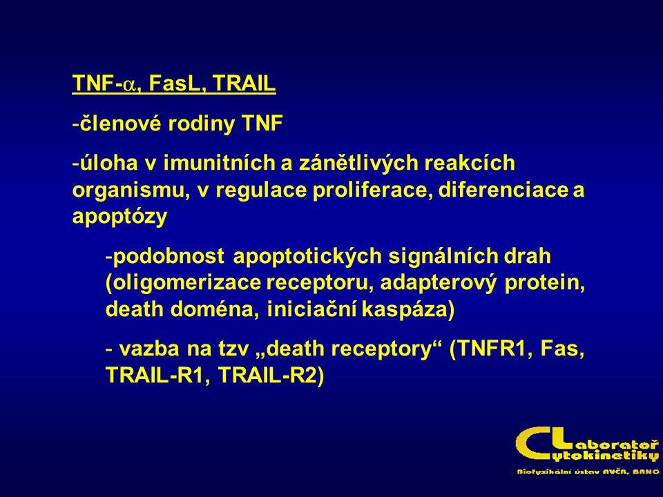 TNF- , FasL, TRAIL -členové rodiny TNF -úloha v imunitních a zánětlivých reakcích organismu, v regulace proliferace, diferenciace a apoptózy -podobno