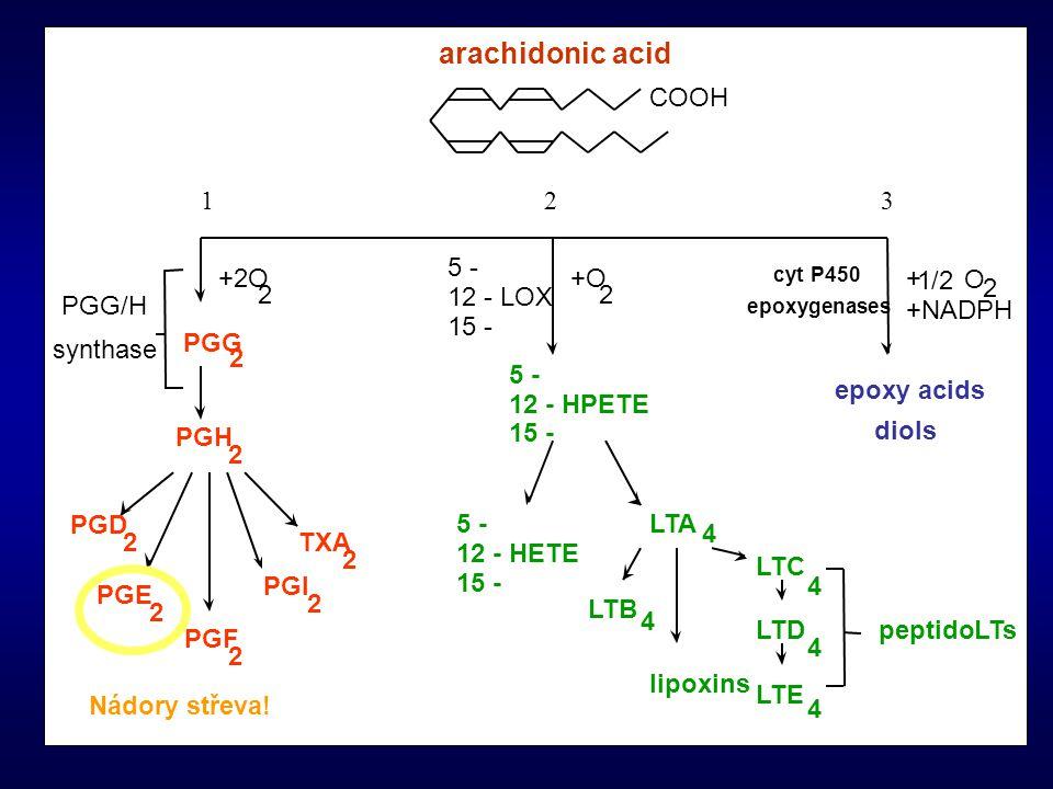 COOH arachidonic acid +2O 2 +O 2 + 1/2 O 2 PGG 2 PGH 2 PGD 2 PGE 2 PGF 2 PGI 2 TXA 2 5 - 12 - LOX 15 - 5 - 12 - HPETE 15 - 5 - 12 - HETE 15 - LTA 4 LT