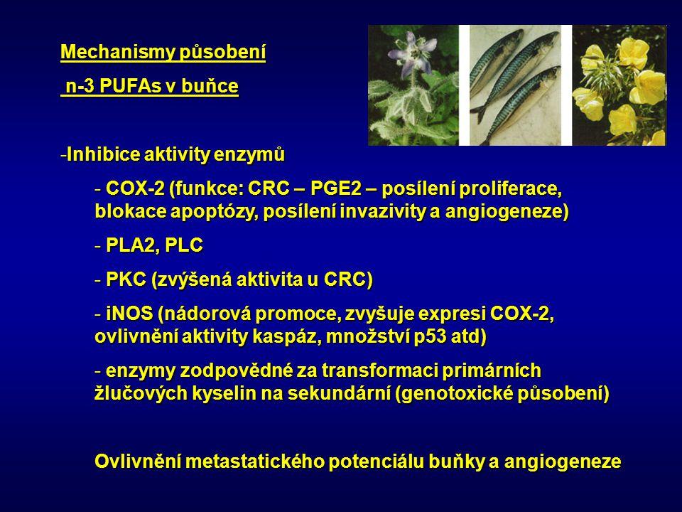 Mechanismy působení n-3 PUFAs v buňce n-3 PUFAs v buňce -Inhibice aktivity enzymů - COX-2 (funkce: CRC – PGE2 – posílení proliferace, blokace apoptózy