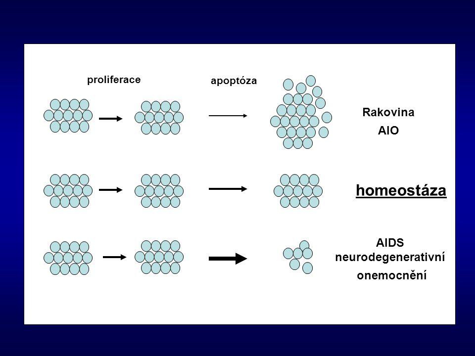 Rakovina AIO AIDS neurodegenerativní onemocnění homeostáza apoptóza proliferace