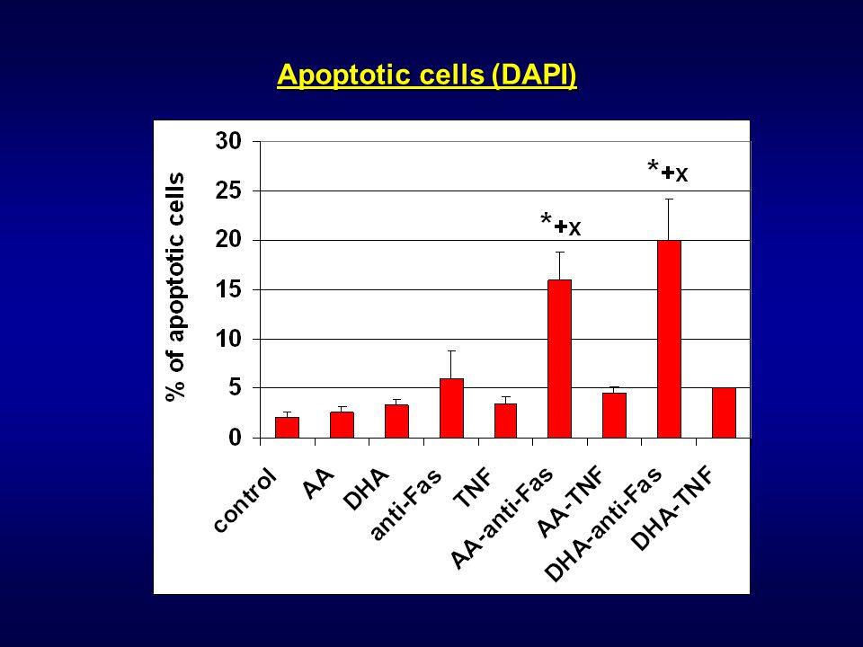 Apoptotic cells (DAPI)