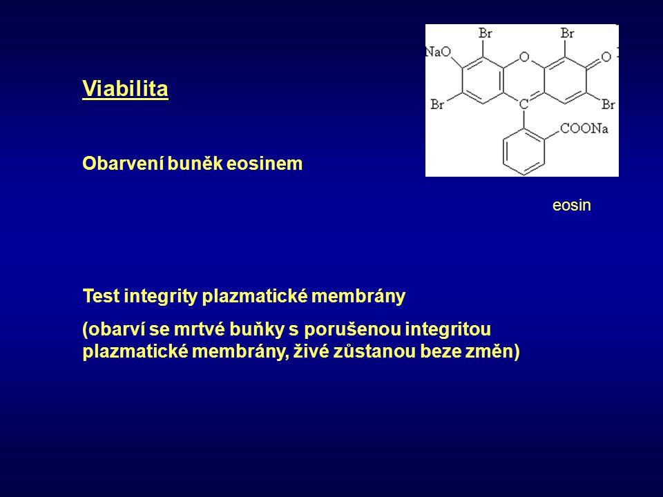 Viabilita Obarvení buněk eosinem Test integrity plazmatické membrány (obarví se mrtvé buňky s porušenou integritou plazmatické membrány, živé zůstanou