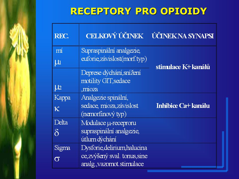 RECEPTORY PRO OPIOIDY