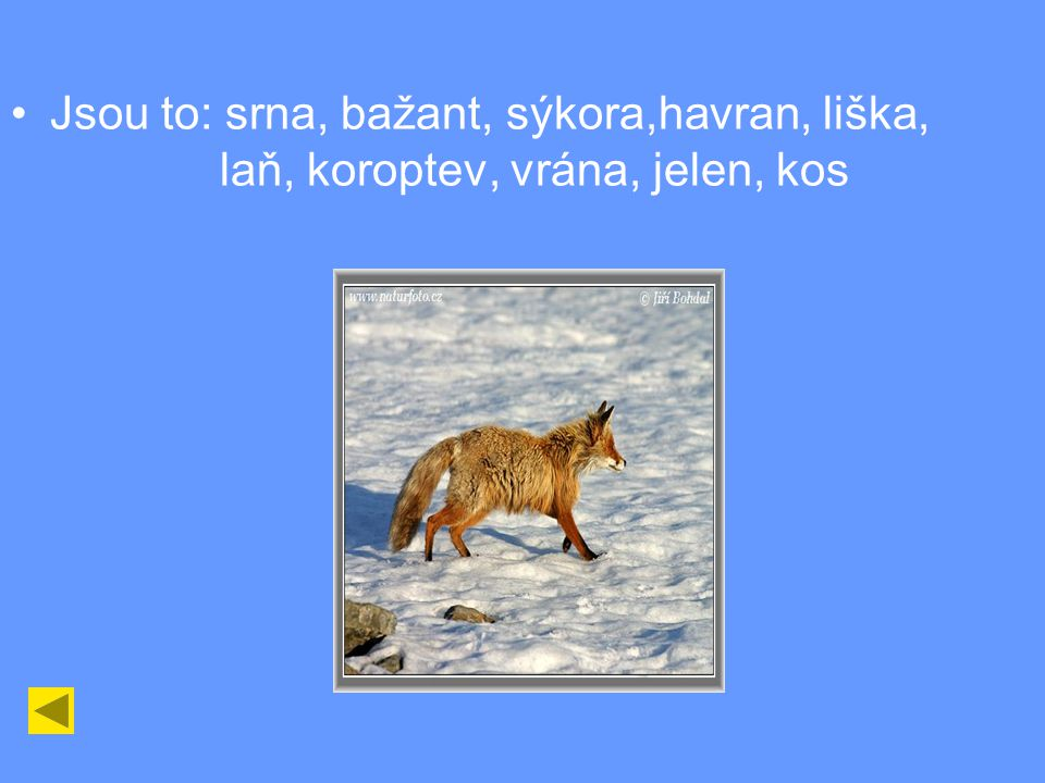 Ve čtyřsměrce vyhledejte zvířata, která můžete vidět v zimě (vypište si je). SRNASOKV JBAZANTR ECEBARVÁ LSÝKORAN ENARVAHA NAKŠILAŇ KOROPTEV