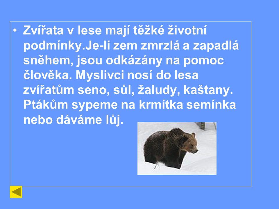 Zvířata v lese mají těžké životní podmínky.Je-li zem zmrzlá a zapadlá sněhem, jsou odkázány na pomoc člověka.