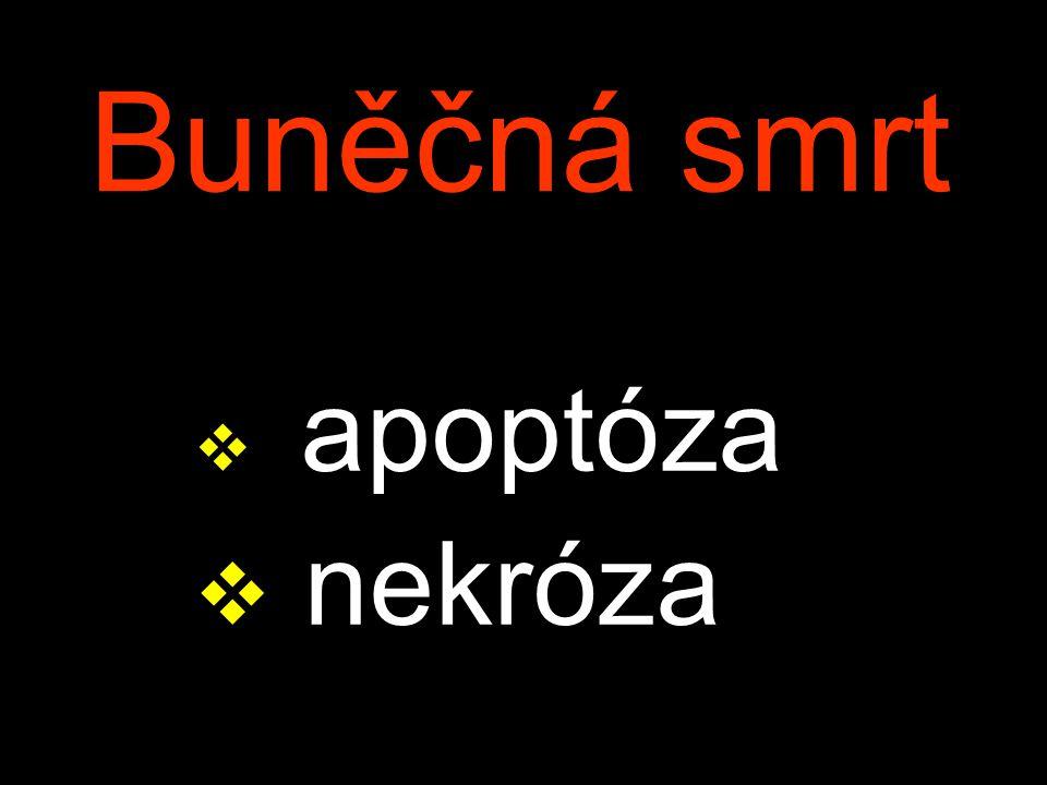 Mucoviscidosis fibrosis cystica, fibrocystická nemoc Komplikace: – meconiový ileus – steatorrhea – pancreatická fibrosa & cysty – bronchitis, bronchopneumonia, bronchiektasie – sterilita
