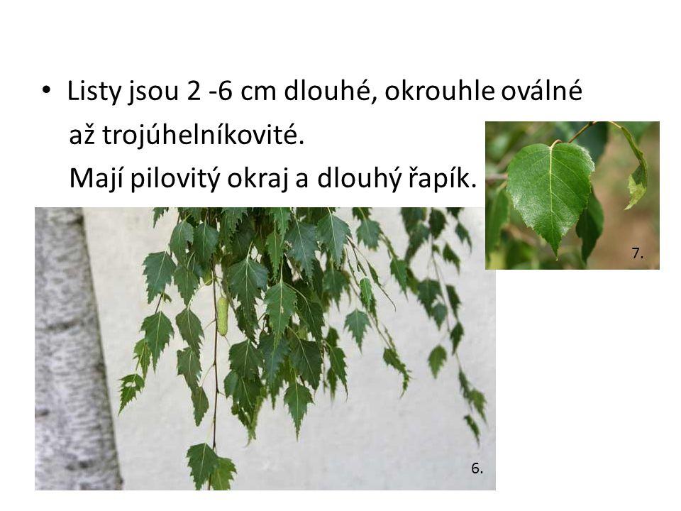 Listy jsou 2 -6 cm dlouhé, okrouhle oválné až trojúhelníkovité.