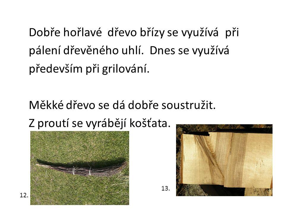 Dobře hořlavé dřevo břízy se využívá při pálení dřevěného uhlí.