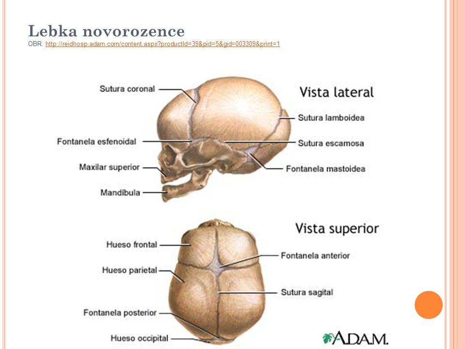 Lebka novorozence OBR. http://reidhosp.adam.com/content.aspx?productId=39&pid=5&gid=003309&print=1http://reidhosp.adam.com/content.aspx?productId=39&p