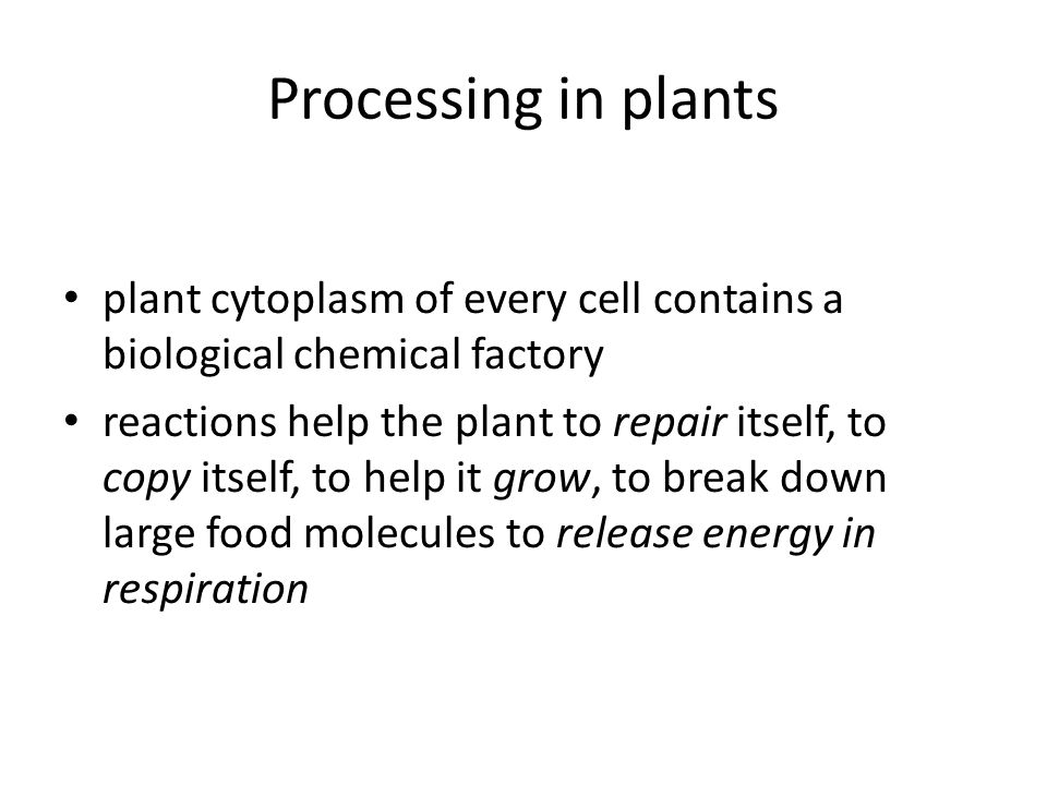 Processing in plants plant cytoplasm of every cell contains a biological chemical factory reactions help the plant to repair itself, to copy itself, t
