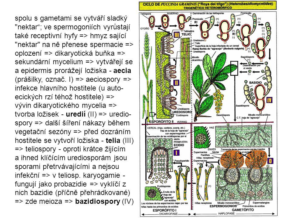 http://www.botany.hawaii.edu/faculty /wong/Bot201/Basidiomycota /Uredinomycetes/Uredinomycetes.htm /Uredinomycetes/Uredinomycetes.htm (řez spermog.