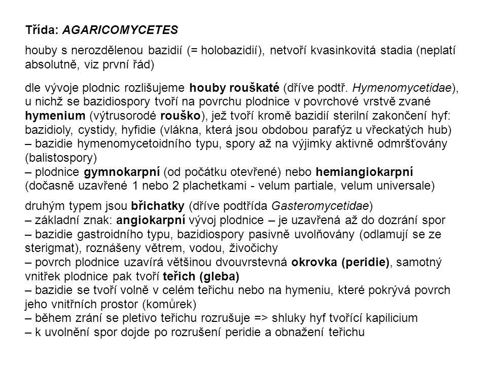 řád Polyporales zahrnuje houby laicky označované choroše – většina druhů tvoří gymnokarpní krusto- thecia, obvykle bokem přirostlá a často víceletá, s pórovitým nebo lamelovitým hymenoforem dřevní houby, saprofyté nebo fakultativní (i obligátní) parazité charakterističtí zástupci: Fomes a Fomitopsis (česky obojí troudnatec, kopytovité plodnice), Daedalea (síťkovec, protažené až lamelovité póry), Ganoderma (lesklokorka), Trametes (outkovka); některé druhy jsou v mládí jedlé - Laetiporus (sírovec), Fistulina (pstřeň) – vlastní rod Polyporus (choroš) - houby s dobře odlišeným třeněm a kloboukem, pórovitý hymenofor Vpravo nahoře: outkovka pestrá (Trametes versicolor) Foto Juraj Komár, http://www.nahuby.sk/atlas-hub/Trametes-versicolor/Trudnikovec-pestry/Outkovka-pestra/ID764http://www.nahuby.sk/atlas-hub/Trametes-versicolor/Trudnikovec-pestry/Outkovka-pestra/ID764 Vpravo dole: sírovec žlutooranžový (Laetiporus sulphureus) Foto Sloník :o) Vlevo: Choroš zimní (Polyporus brumalis) Foto Ján Šuvada, http://www.nahuby.skhttp://www.nahuby.sk /atlas-hub/Polyporus-brumalis/Trudnik- zimny/Choros-poloplastvovy/ID1824