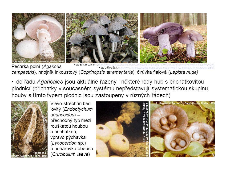 řád Boletales – hemiangiokarpní (vytvořeno velum partiale) nebo gymnokarpní pilothecia s hymenoforem rourkatým, vzácněji lupenitým (snadno se odděluje od dužniny klobouku) převážně mykorhizní houby – největším rodem je Boletus (hřib), dále rody Suillus (klouzek), Xerocomus (suchohřib) nebo Leccinum (kozák); z lupenitých mají význam Gomphidius (slizák) nebo Paxillus (čechratka) Zleva suchohřib hnědý (Xerocomus badius), klouzek modřínový (Suillus grevillei), vpravo nahoře slizák mazlavý (Gomphidius glutinosus), dole čechratka podvinutá (Paxillus involutus) Foto Yvona Janotová, http://www.nahuby.sk/atlas-hub/Boletus-badius/Suchohrib-hnedy/Suchohrib-hnedy/ID673http://www.nahuby.sk/atlas-hub/Boletus-badius/Suchohrib-hnedy/Suchohrib-hnedy/ID673 Foto Ivan Belay, http://www.nahuby.sk/atlas-hub/Suillus-grevillei/Masliak-smrekovcovy/Klouzek-slicny/ID276http://www.nahuby.sk/atlas-hub/Suillus-grevillei/Masliak-smrekovcovy/Klouzek-slicny/ID276 Foto Pavol Kešeľák, http://www.nahuby.sk/atlas-hub/Gomphidius-glutinosus/Sliziak-mazlavy/Slizak-mazlavy/ID609http://www.nahuby.sk/atlas-hub/Gomphidius-glutinosus/Sliziak-mazlavy/Slizak-mazlavy/ID609 Foto Ondrej Líška, http://www.nahuby.sk/atlas-hub/Paxillus-involutus/Cechracka-podvinuta/Cechratka-podvinuta/ID21http://www.nahuby.sk/atlas-hub/Paxillus-involutus/Cechracka-podvinuta/Cechratka-podvinuta/ID21