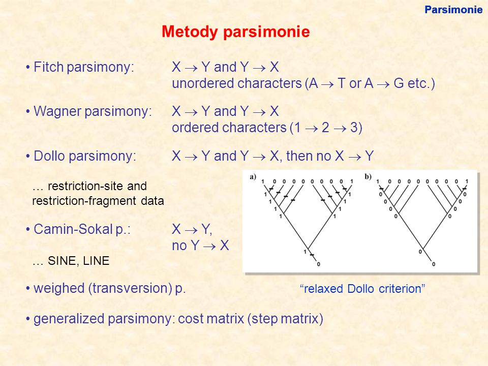 Metody parsimonie Fitch parsimony: X  Y and Y  X unordered characters (A  T or A  G etc.) Wagner parsimony: X  Y and Y  X ordered characters (1  2  3) Dollo parsimony: X  Y and Y  X, then no X  Y … restriction-site and restriction-fragment data Camin-Sokal p.: X  Y, no Y  X … SINE, LINE weighed (transversion) p.