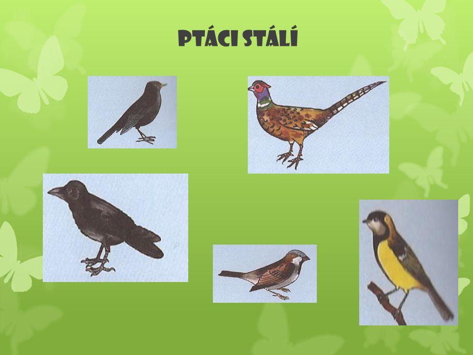 Ptáci stálí