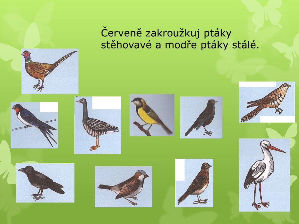 Červeně zakroužkuj ptáky stěhovavé a modře ptáky stálé.