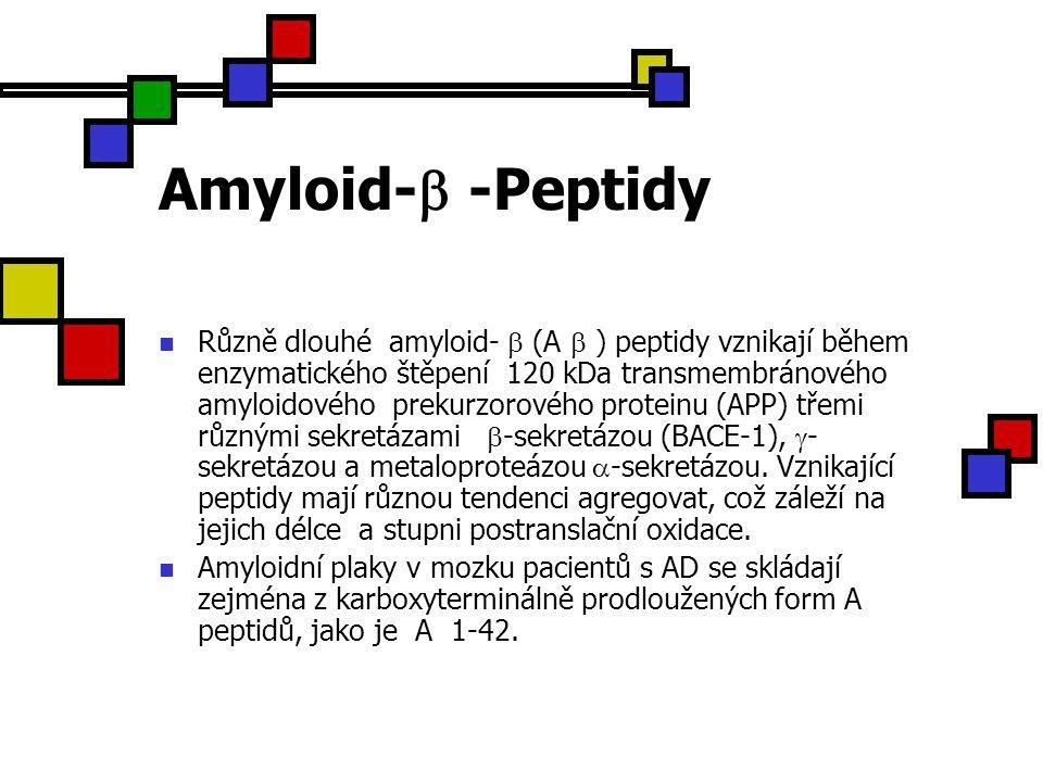 Amyloid-  -Peptidy Různě dlouhé amyloid-  (A  ) peptidy vznikají během enzymatického štěpení 120 kDa transmembránového amyloidového prekurzorového