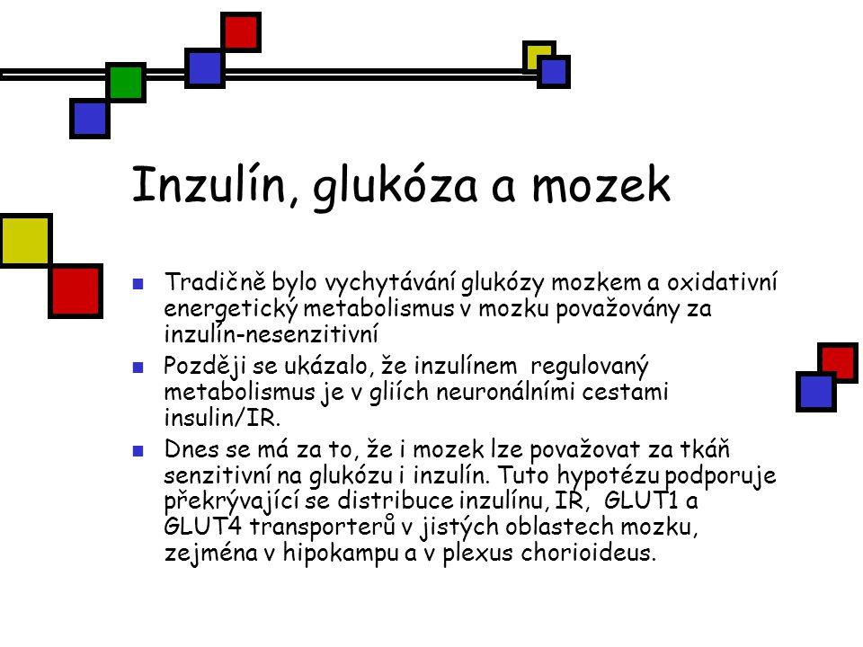Inzulín, glukóza a mozek Hladiny inzulínu po jídle maximálně stimulují celkový metabolismus glukózy v kůře mozkové, buď přímo (jako v periferních tkáníchú, nebo nepřímo cestou inzulínem, stimulované neuronální aktivace.