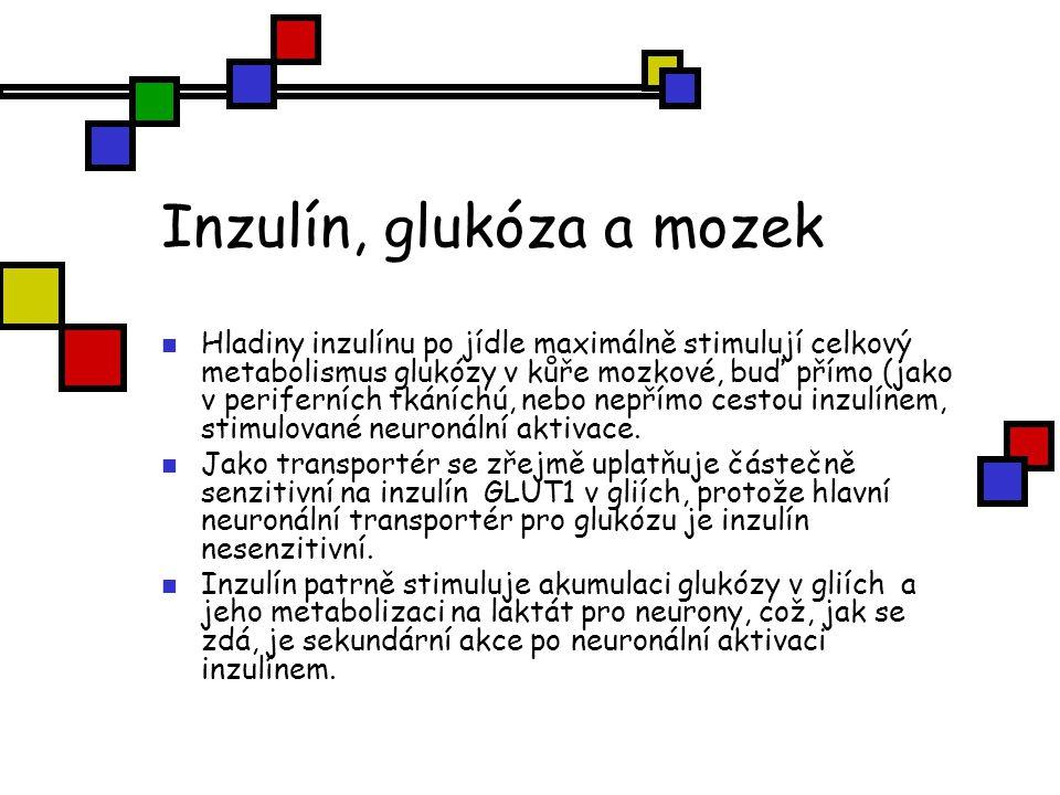 Inzulín, glukóza a mozek Hladiny inzulínu po jídle maximálně stimulují celkový metabolismus glukózy v kůře mozkové, buď přímo (jako v periferních tkán