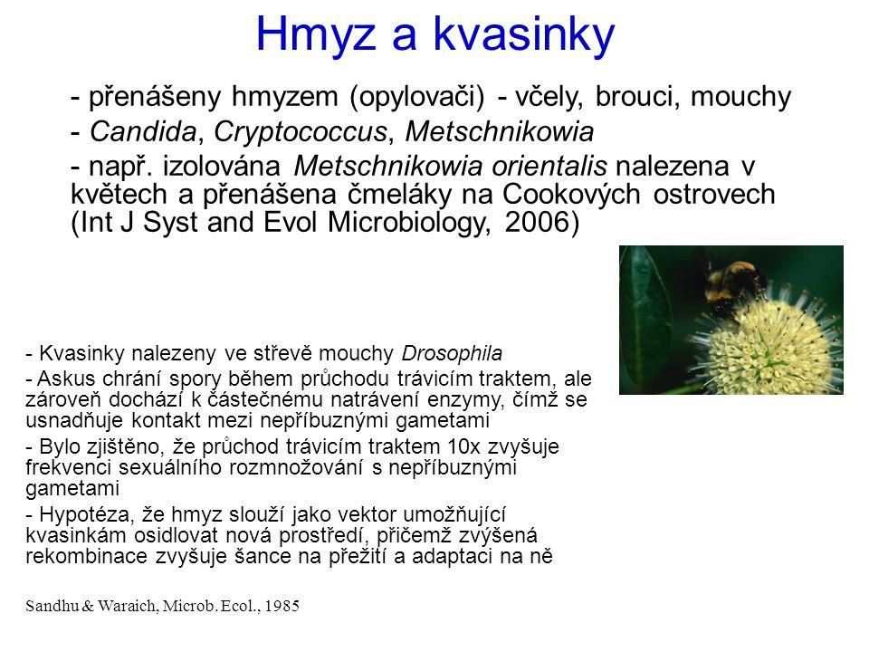 Hmyz a kvasinky - přenášeny hmyzem (opylovači) - včely, brouci, mouchy - Candida, Cryptococcus, Metschnikowia - např. izolována Metschnikowia oriental