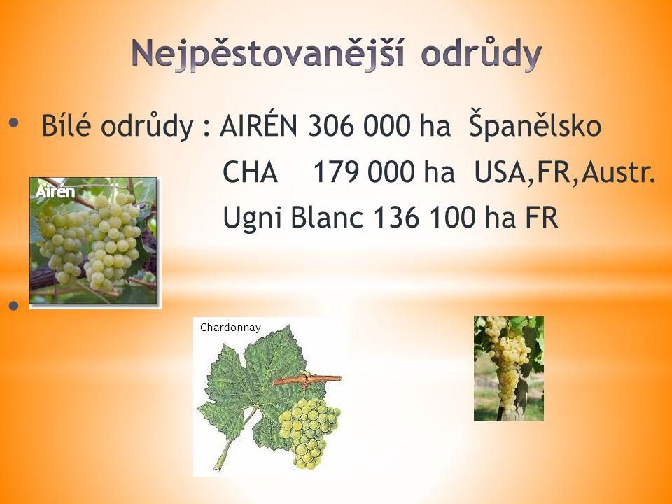 Bílé odrůdy : AIRÉN 306 000 ha Španělsko CHA 179 000 ha USA,FR,Austr.