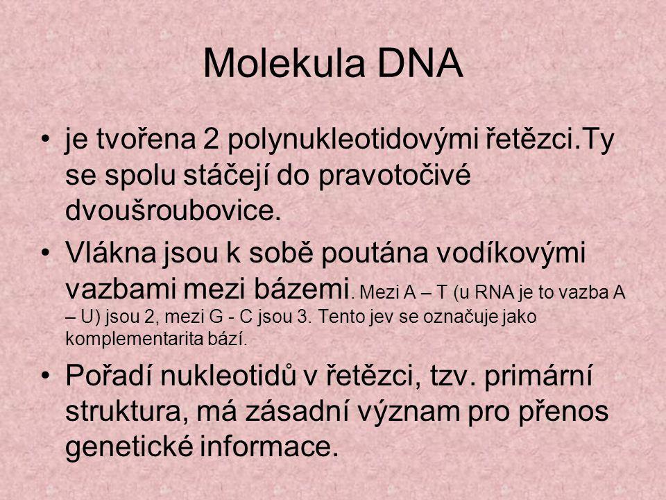 Molekula DNA je tvořena 2 polynukleotidovými řetězci.Ty se spolu stáčejí do pravotočivé dvoušroubovice.