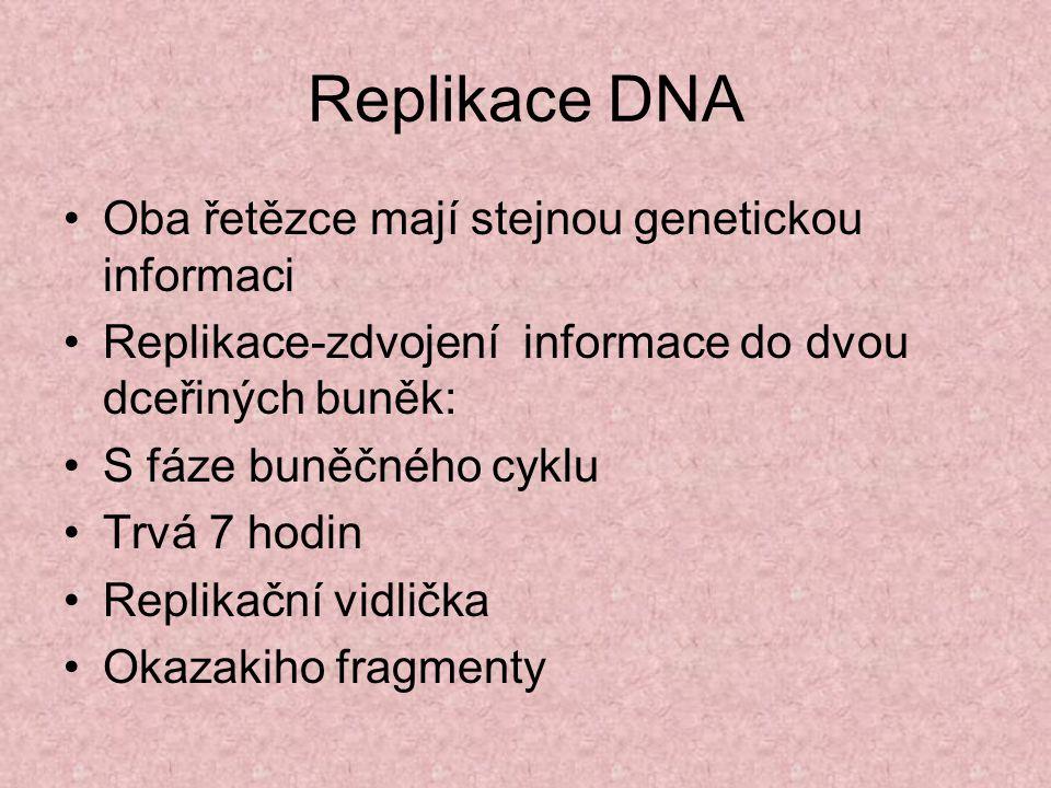 Replikace DNA Oba řetězce mají stejnou genetickou informaci Replikace-zdvojení informace do dvou dceřiných buněk: S fáze buněčného cyklu Trvá 7 hodin Replikační vidlička Okazakiho fragmenty