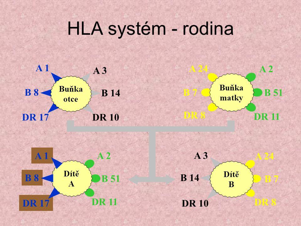 HLA systém - rodina A 2 B 51 DR 11 A 1 B 8 DR 17 Dítě A A 3 B 14 DR 10 A 1 B 8 DR 17 Buňka otce A 24 B 7 DR 8 A 2 B 51 DR 11 Buňka matky A 3 B 14 DR 10 A 24 B 7 DR 8 Dítě B