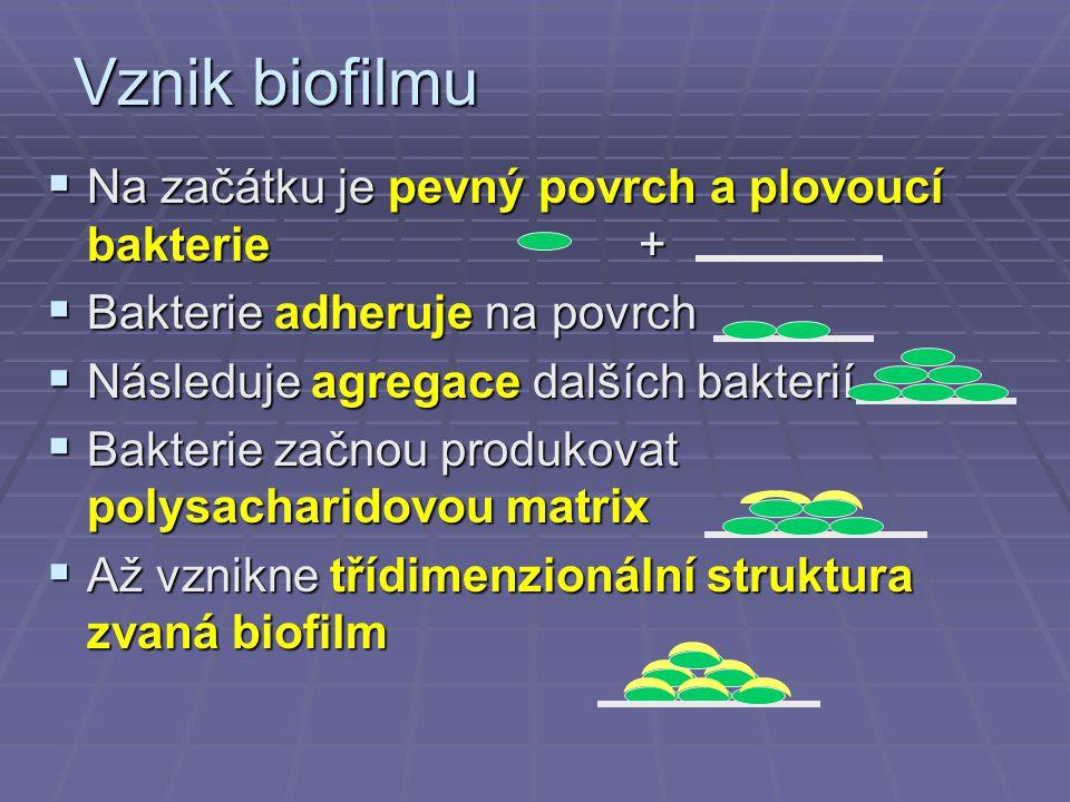 Vznik biofilmu  Na začátku je pevný povrch a plovoucí bakterie +  Bakterie adheruje na povrch  Následuje agregace dalších bakterií  Bakterie začno