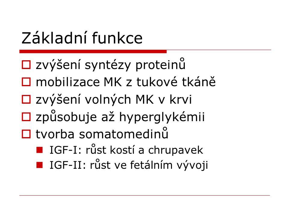 Základní funkce  zvýšení syntézy proteinů  mobilizace MK z tukové tkáně  zvýšení volných MK v krvi  způsobuje až hyperglykémii  tvorba somatomedi
