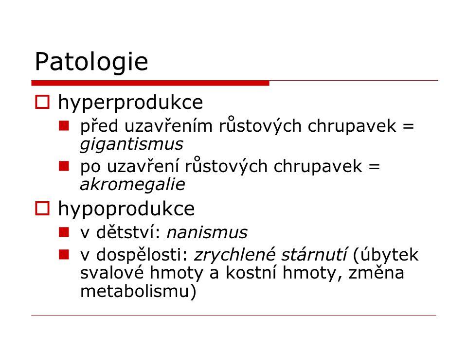 Patologie  hyperprodukce před uzavřením růstových chrupavek = gigantismus po uzavření růstových chrupavek = akromegalie  hypoprodukce v dětství: nan