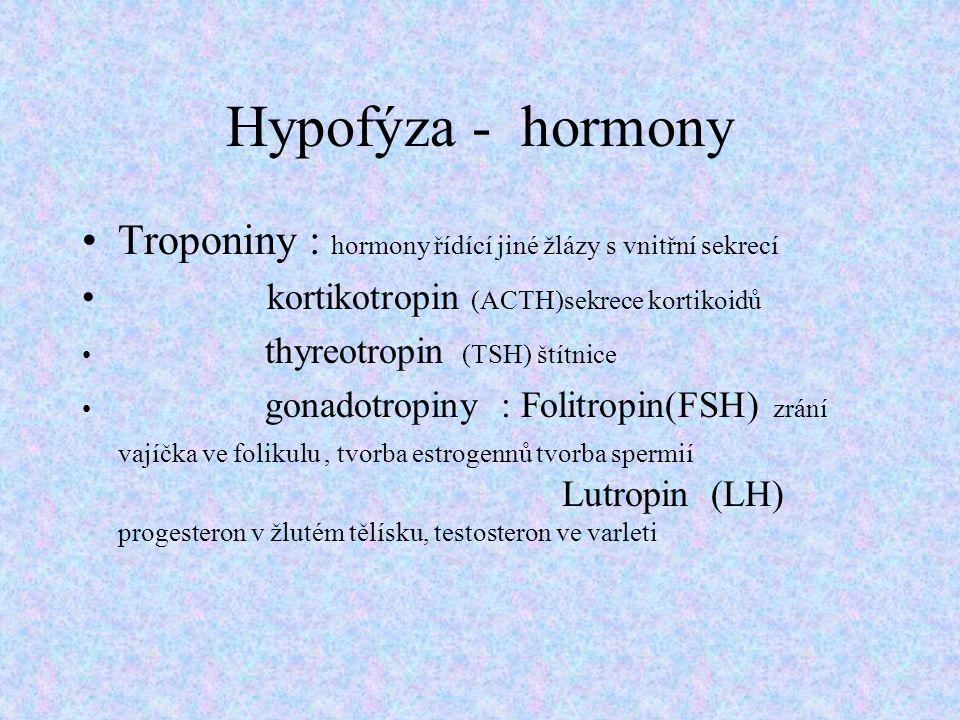 Hypofýza - hormony Troponiny : hormony řídící jiné žlázy s vnitřní sekrecí kortikotropin (ACTH)sekrece kortikoidů thyreotropin (TSH) štítnice gonadotr