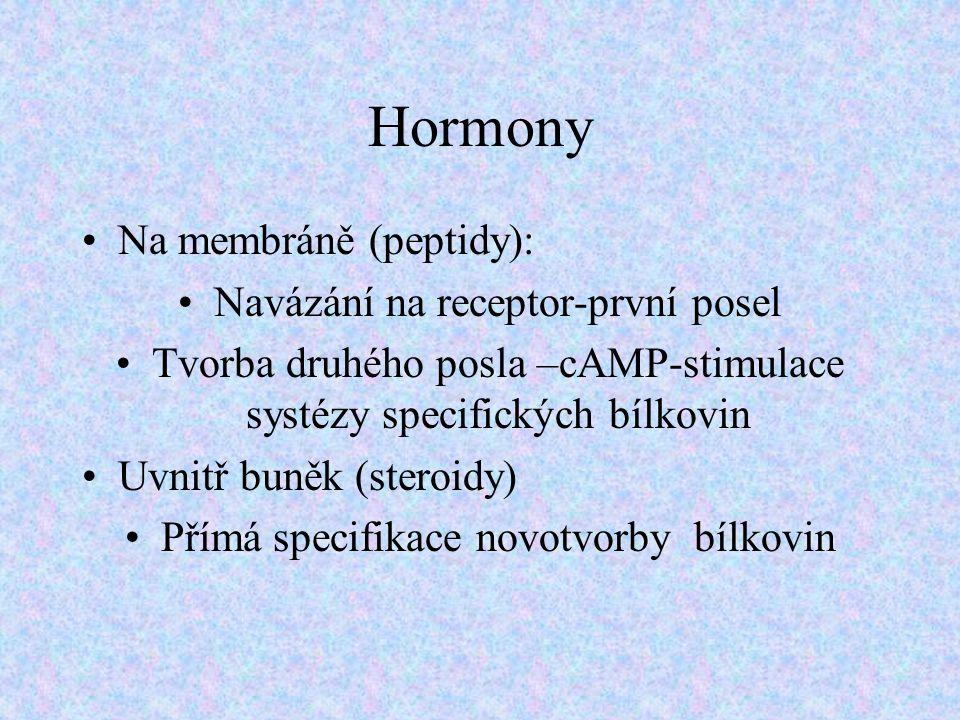 Hormony Na membráně (peptidy): Navázání na receptor-první posel Tvorba druhého posla –cAMP-stimulace systézy specifických bílkovin Uvnitř buněk (stero