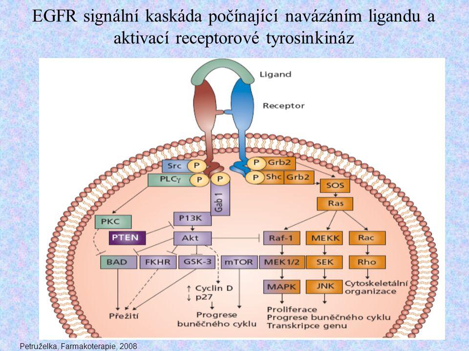 EGFR signální kaskáda počínající navázáním ligandu a aktivací receptorové tyrosinkináz Petruželka, Farmakoterapie, 2008