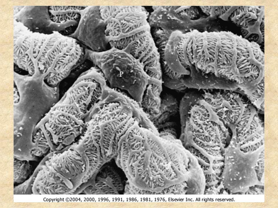 Muž, 21 let, obtíže: Při respiračních infektech bývá horečka provázena makroskopickou hematurií (moč barvy Coca-Coly).