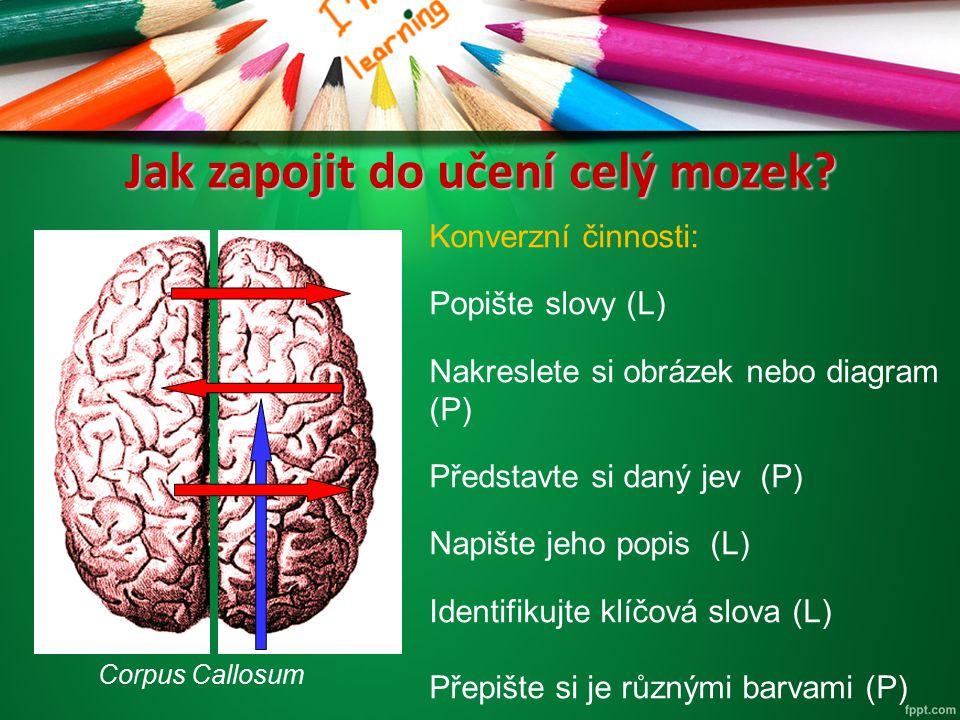 Jak zapojit do učení celý mozek? Corpus Callosum Konverzní činnosti: Popište slovy (L) Nakreslete si obrázek nebo diagram (P) Představte si daný jev (
